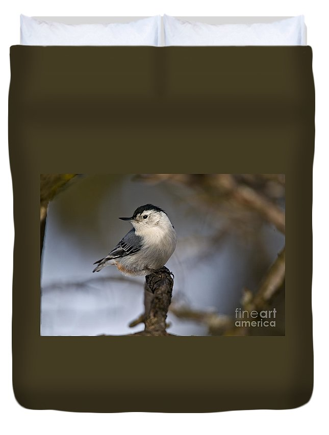 White-breasted Nuthatch Duvet Cover featuring the photograph White-breasted Nuthatch Pictures 60 by World Wildlife Photography