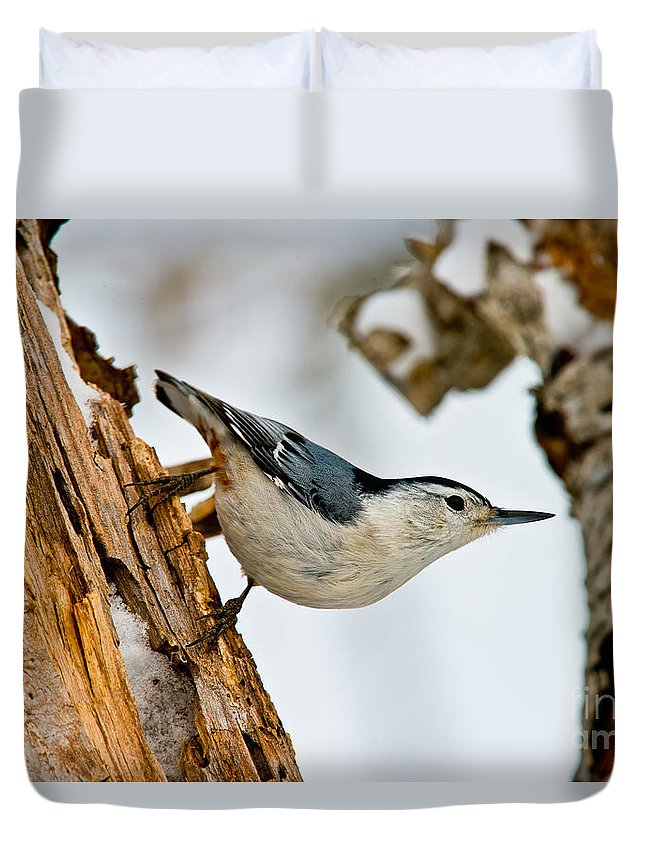 White-breasted Nuthatch Duvet Cover featuring the photograph White-breasted Nuthatch Pictures 97 by World Wildlife Photography