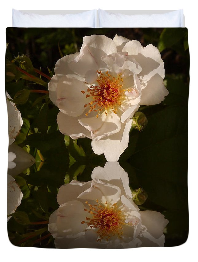 Briar Rose Duvet Cover featuring the photograph White Briar Rose Reflection by Christiane Schulze Art And Photography