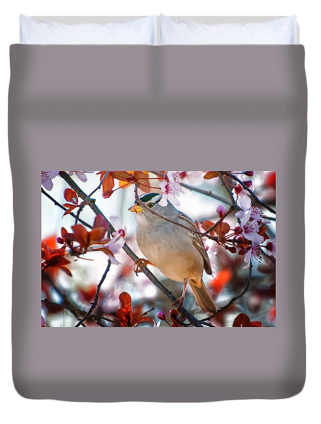 Birds Duvet Cover featuring the photograph White-crowned Sparrow by Jim Thompson