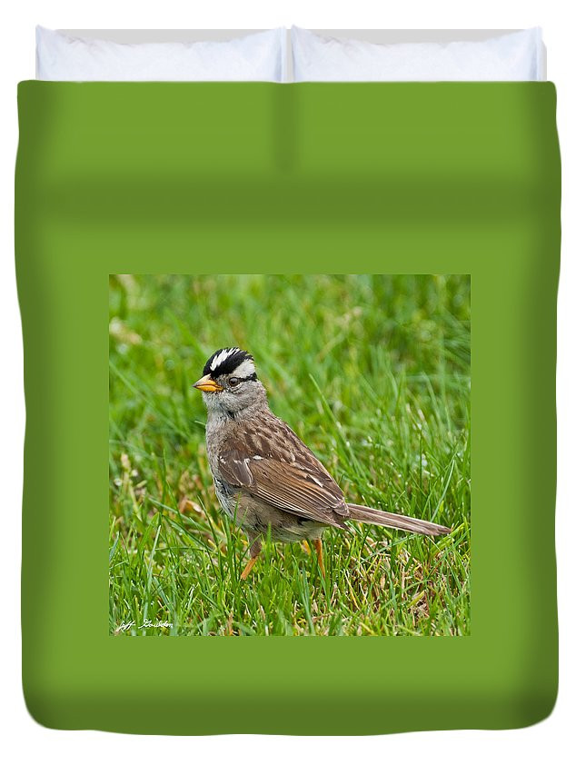 Adult Duvet Cover featuring the photograph White Crowned Sparrow by Jeff Goulden