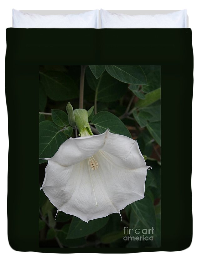White Datura Duvet Cover featuring the photograph White Datura by Christiane Schulze Art And Photography