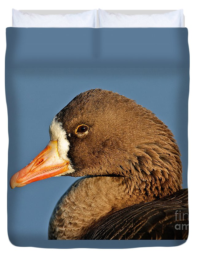 Greater White-fronted Goose Duvet Cover featuring the photograph White-fronted Goose by Anthony Mercieca