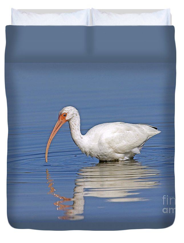 White Ibis Duvet Cover featuring the photograph White Ibis by Anthony Mercieca