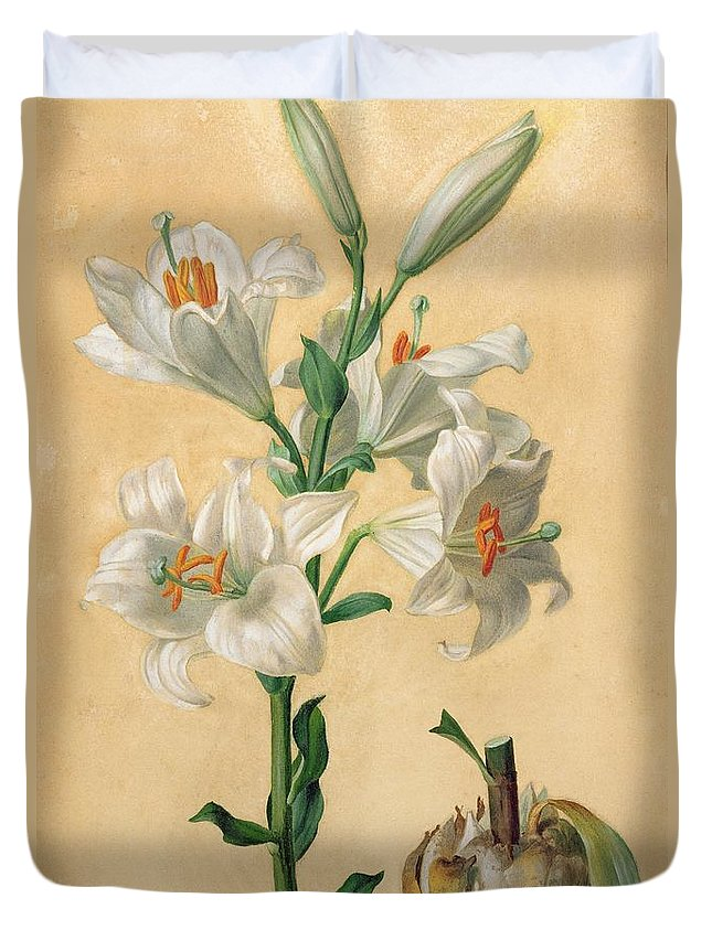 Floral Duvet Cover featuring the painting White Lily by Carl Franz Gruber