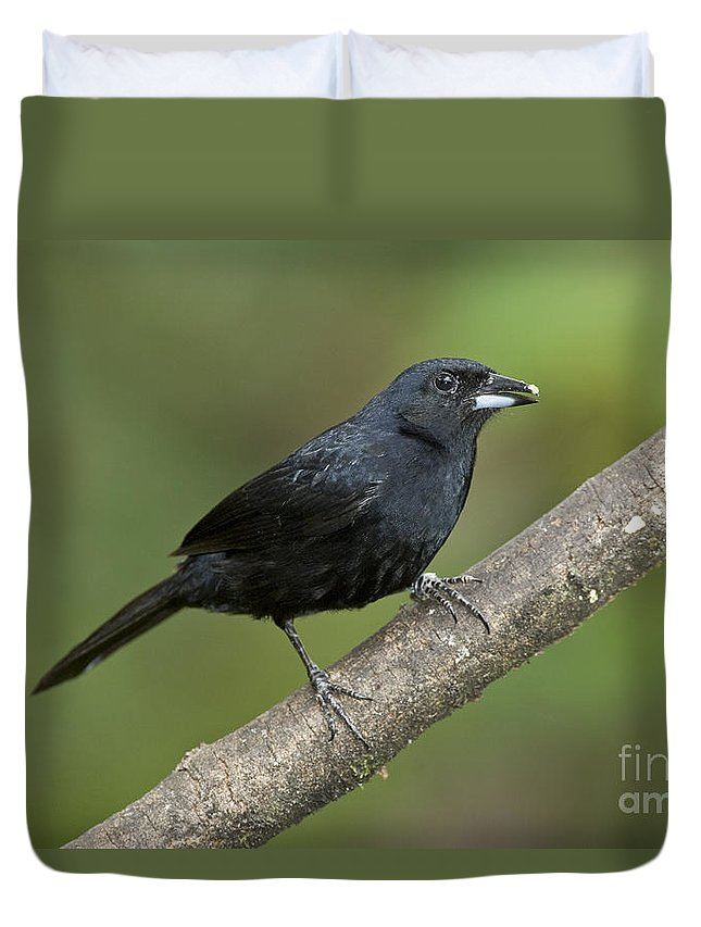 Animal Duvet Cover featuring the photograph White-lined Tanager by Anthony Mercieca