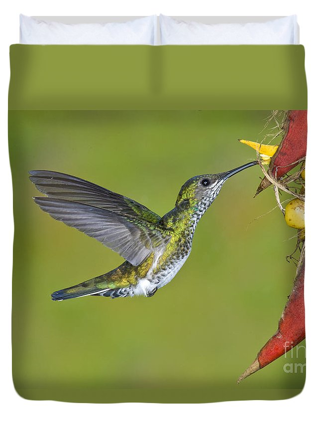 Animal Duvet Cover featuring the photograph White-necked Jacobin by Anthony Mercieca