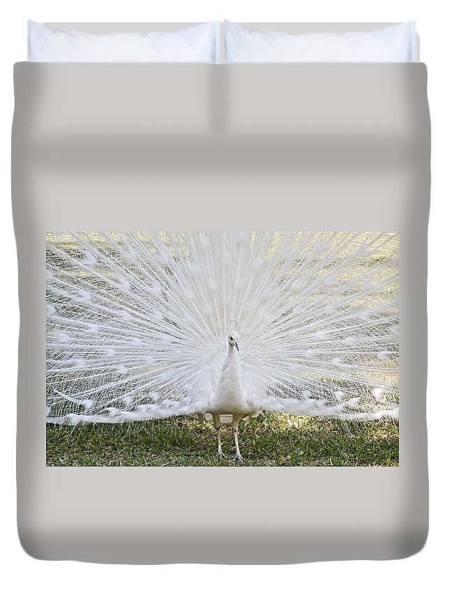 White Duvet Cover featuring the photograph White Peacock - Fountain of Youth by Alexandra Till
