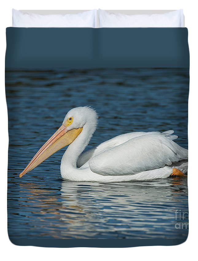 American White Pelican Duvet Cover featuring the photograph White Pelican Swimming by Anthony Mercieca