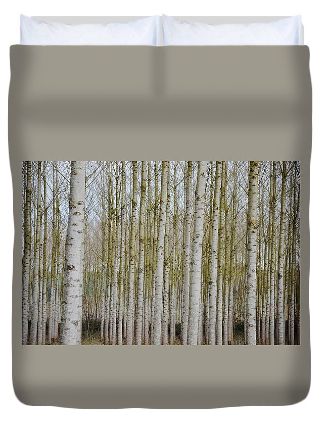 Tree Duvet Cover featuring the photograph White Poles IIi by Christina Walker