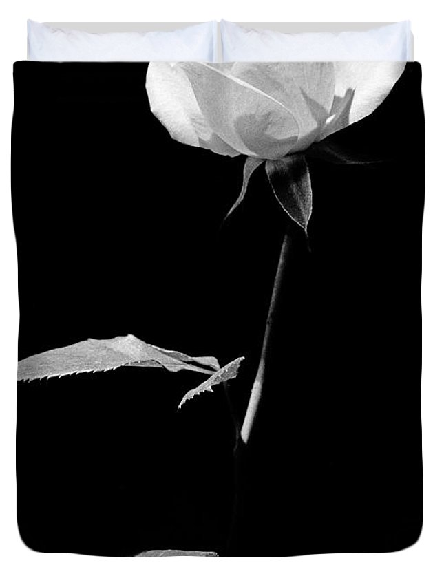 Rose Duvet Cover featuring the photograph White Rose by Casper Cammeraat