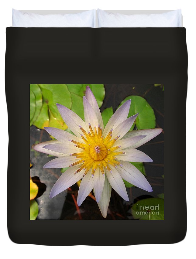 White Star Lotus White Lotus Flower Aquatic Flowers Aquatic Flora Aquatic Plants Water Garden Flora Pond Plants White Water Lily Lotus Blooms Lotus Blossoms Divine Design In Nature Rare Flowers Exotic Flora Beautiful Being Duvet Cover featuring the photograph White Star Lotus by Joshua Bales