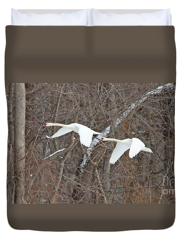 White Swans Duvet Cover featuring the photograph White Swans In Flight 1589 by Jack Schultz