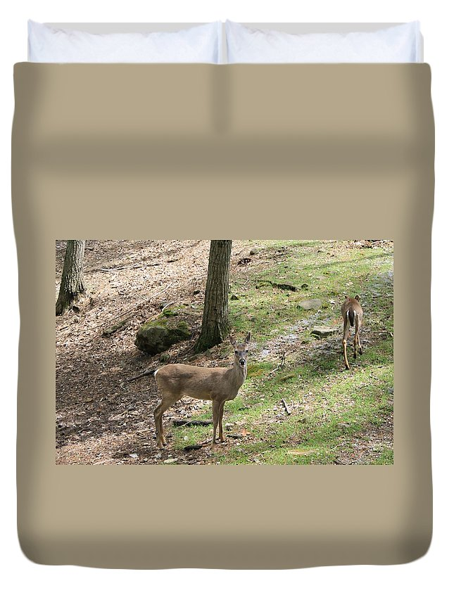 Deer Duvet Cover featuring the photograph White Tail Deer by Mary Koval