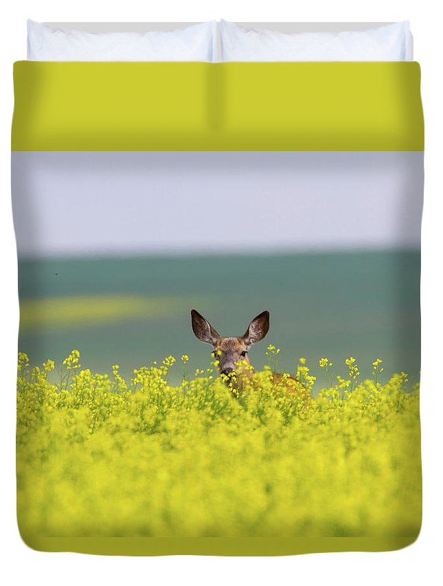 Alertness Duvet Cover featuring the photograph White-tailed Doe by Ed Matuod