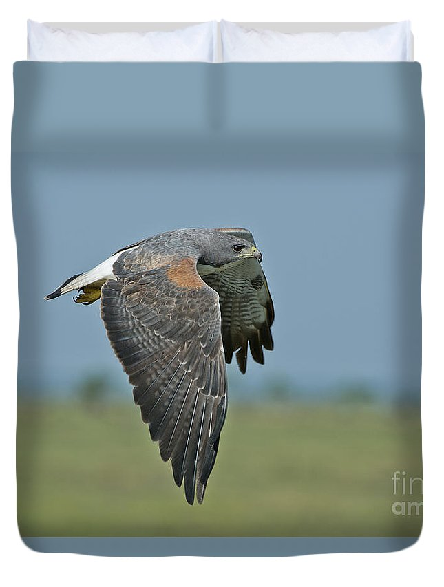 White-tailed Hawk Duvet Cover featuring the photograph White-tailed Hawk by Anthony Mercieca