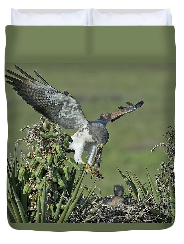White-tailed Hawk Duvet Cover featuring the photograph White-tailed Hawk At Nest by Anthony Mercieca