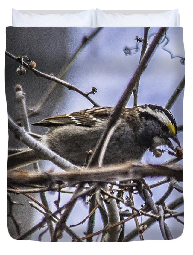 White-throated Sparrow Duvet Cover featuring the photograph White-throated Sparrow With Berry by Ronald Grogan