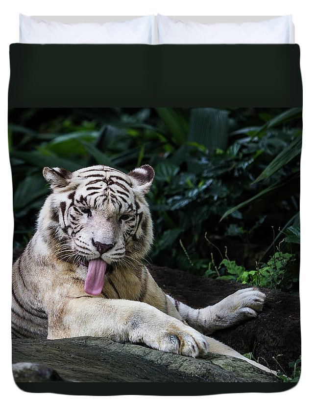 White Tiger Duvet Cover featuring the photograph White Tiger by Manoj Shah