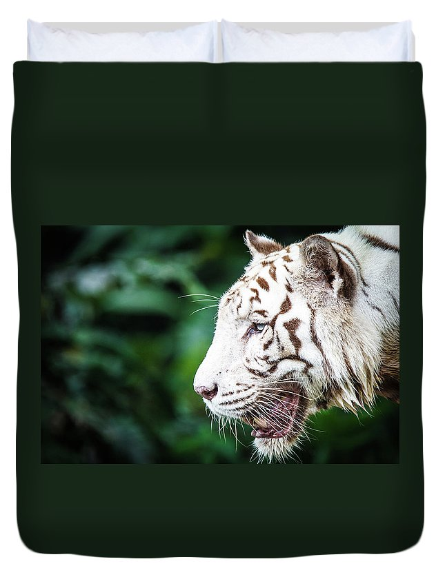 Snarling Duvet Cover featuring the photograph White Tiger by Tony Kh Lim