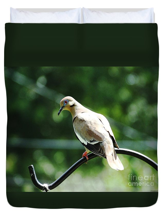 Bird Duvet Cover featuring the photograph White Winged Dove by Lizi Beard-Ward