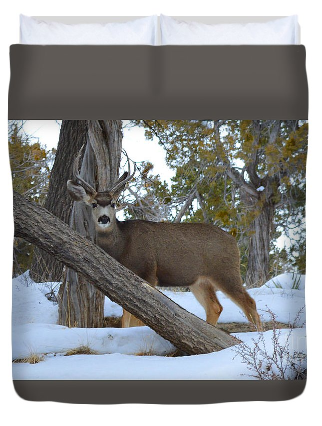 Deer Duvet Cover featuring the photograph Who Me? Oh Deer by Meandering Photography