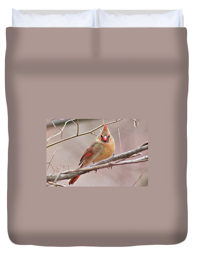 Horn Pond Duvet Cover featuring the photograph Who You Looking At by Joe Faherty