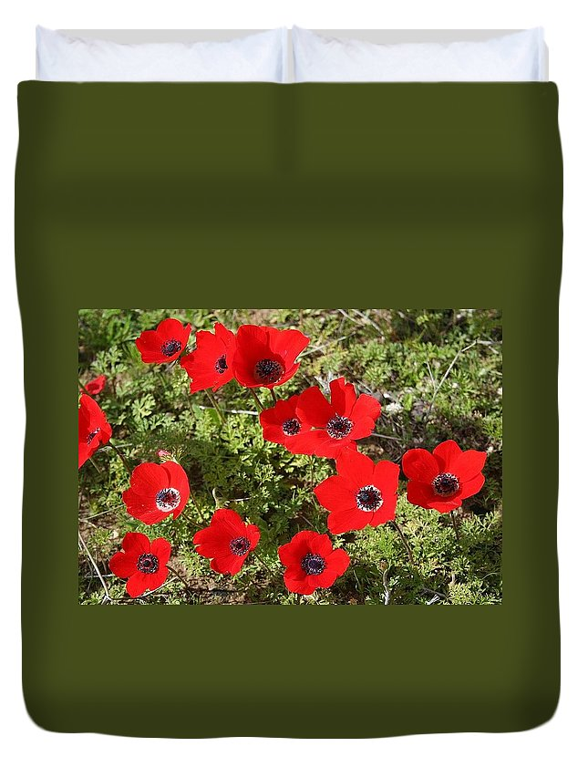 Anemone Coronaria Duvet Cover featuring the photograph Wild Anemone Flowers In A Spring Field by Taiche Acrylic Art