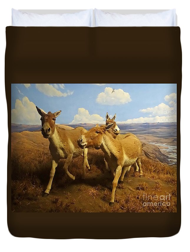 Animals Duvet Cover featuring the photograph Wild Asses by Cindy Manero