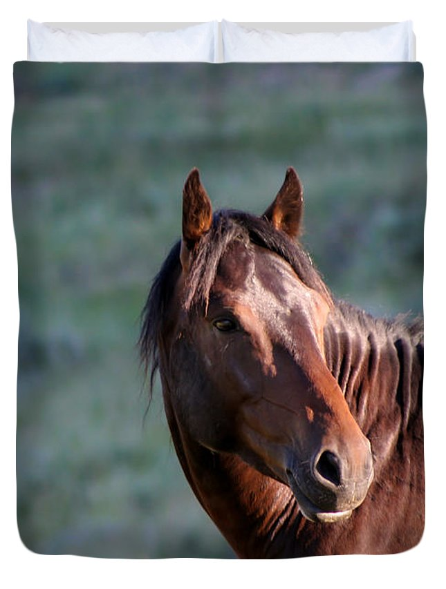 Animal Duvet Cover featuring the photograph Wild Horse by Sabrina L Ryan