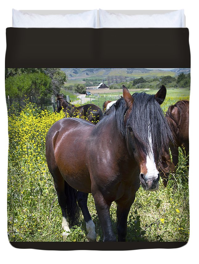 Barbara Snyder Duvet Cover featuring the photograph Wild Horses In California Series 4 by Barbara Snyder