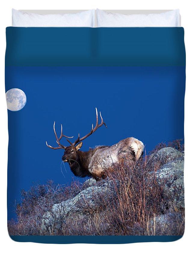 Elk Duvet Cover featuring the photograph Wild Moon by Shane Bechler