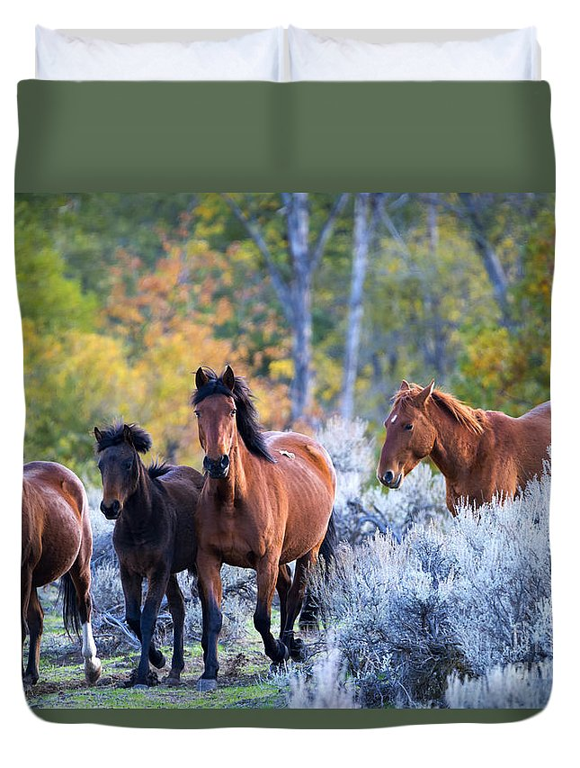 Mustangs Duvet Cover featuring the photograph Wild Mustang Autumn by Mike Dawson