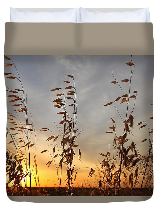 Wild Oats Duvet Cover featuring the photograph Wild Oats 2am-110425 by Andrew McInnes