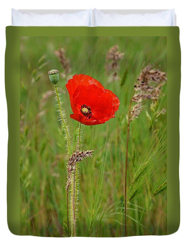 Poppy Duvet Cover featuring the photograph Wild Poppy by Nikolyn McDonald