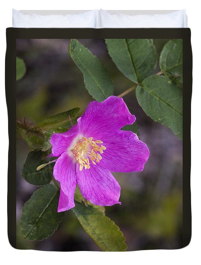 Doug Lloyd Duvet Cover featuring the photograph Wild Rose by Doug Lloyd
