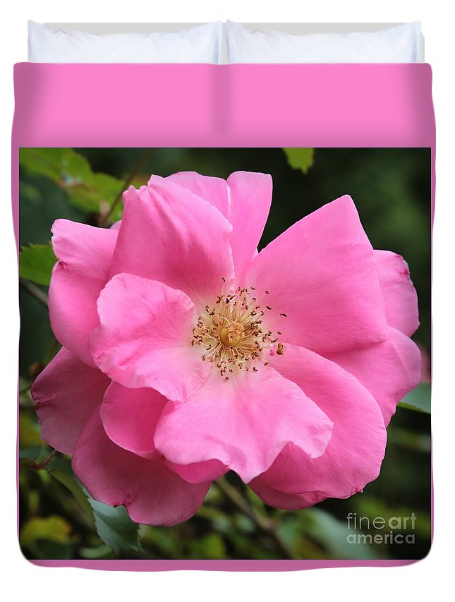 Pink Duvet Cover featuring the photograph Wild Rose Square by Carol Groenen