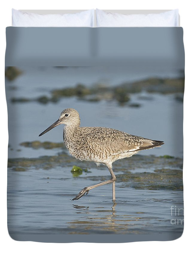 Willet Duvet Cover featuring the photograph Willet by Anthony Mercieca
