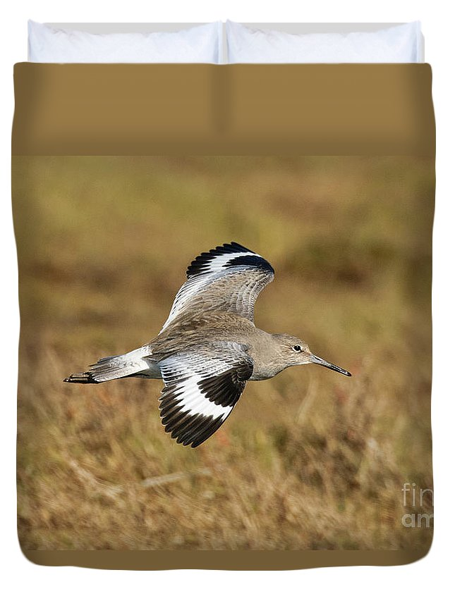 Willet Duvet Cover featuring the photograph Willet In Flight by Anthony Mercieca