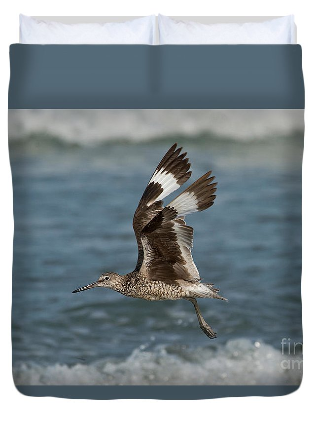 Willet Duvet Cover featuring the photograph Willet In Flight Showing Wing Molt by Anthony Mercieca