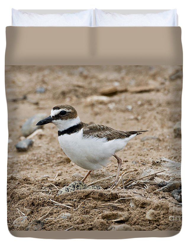 Wilson's Plover Duvet Cover featuring the photograph Wilsons Plover At Nest by Anthony Mercieca