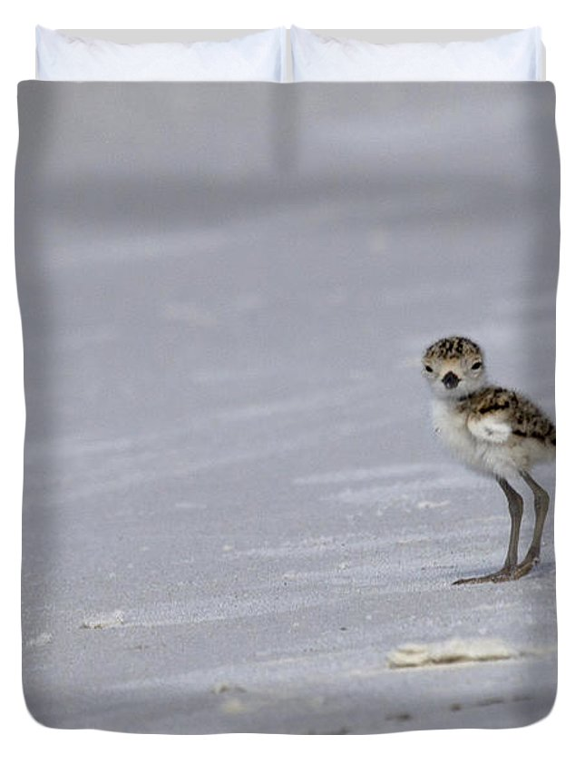 Wilson's Plover Duvet Cover featuring the photograph Wilson's Plover Chick Photo by Meg Rousher