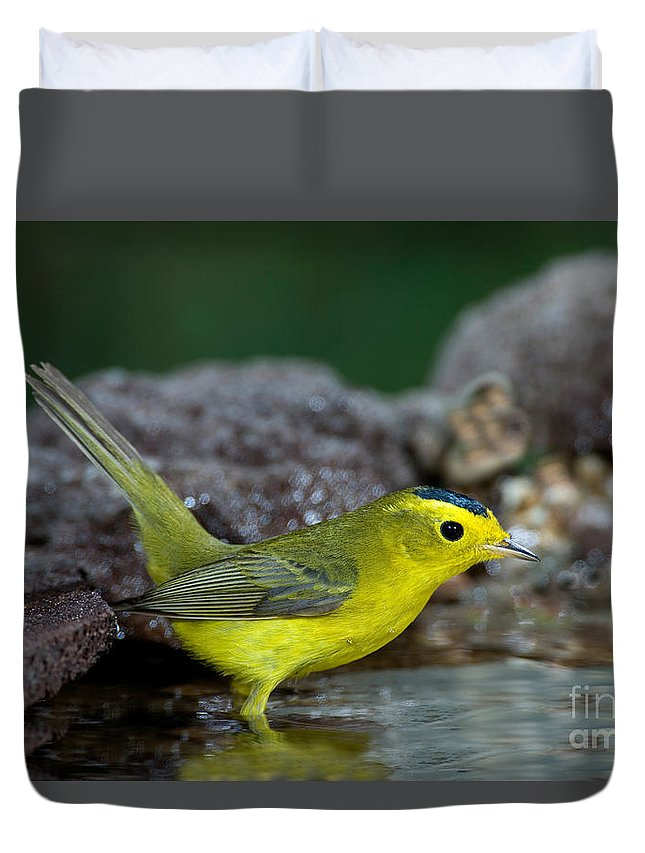 Fauna Duvet Cover featuring the photograph Wilsons Warbler Wilsonia Pusilla by Anthony Mercieca