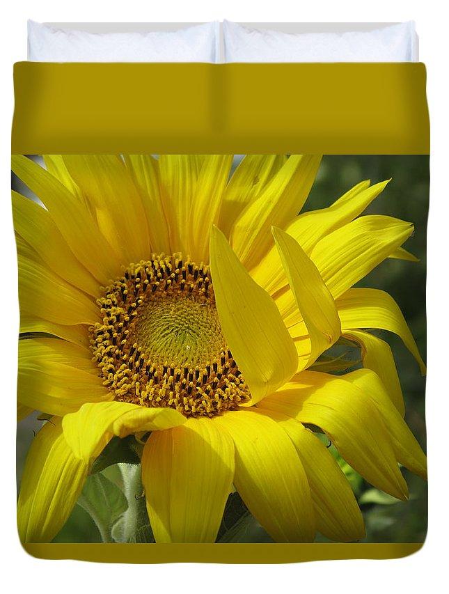 Sunflower Duvet Cover featuring the photograph Windblown Sunflower One by Barbara McDevitt