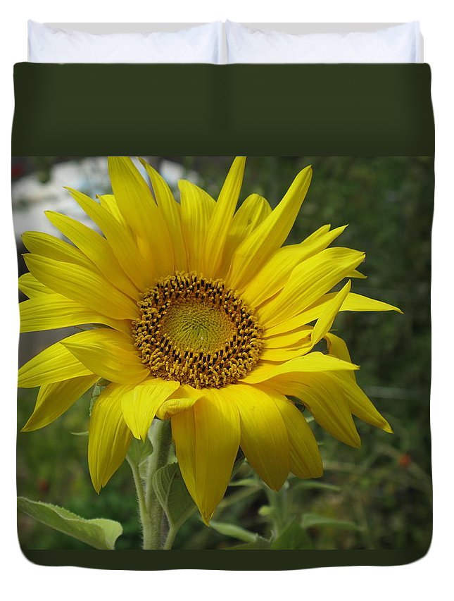 Sunflower Duvet Cover featuring the photograph Windblown Sunflower Two by Barbara McDevitt