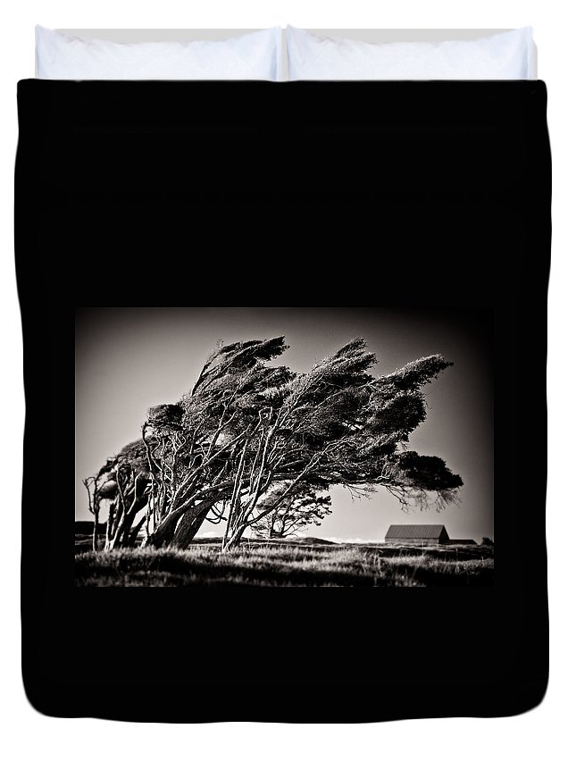Windswept Trees Duvet Cover featuring the photograph Windswept by Dave Bowman