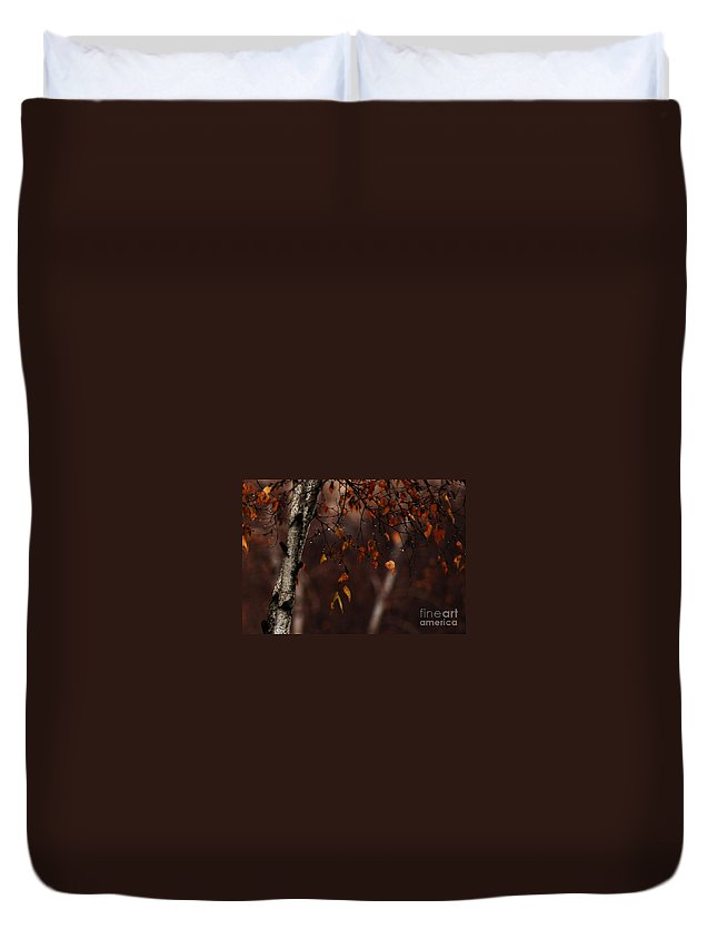 Tree Duvet Cover featuring the photograph Winter Birch by Linda Shafer