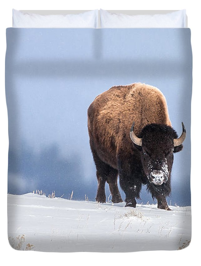 Buffalo Duvet Cover featuring the photograph Winter Bison by Jack Bell