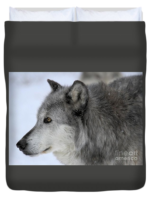 Alpha Wolf Duvet Cover featuring the photograph Winter Intensity by Adam Jewell