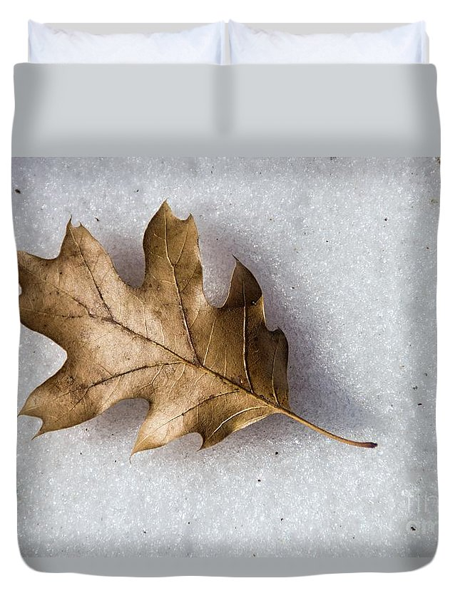 Winter Duvet Cover featuring the photograph Winter by Peggy Hughes
